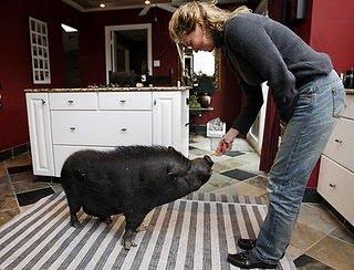 Najstarsza świnia