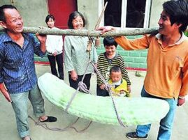 Największy i najdłuższy ogórek na świecie