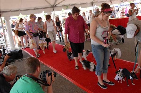 Największy ślub psów