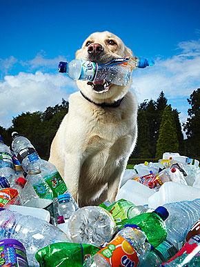 Rekord Guinessa w recyklingu