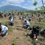 Sadzenie drzew - rekord guinessa