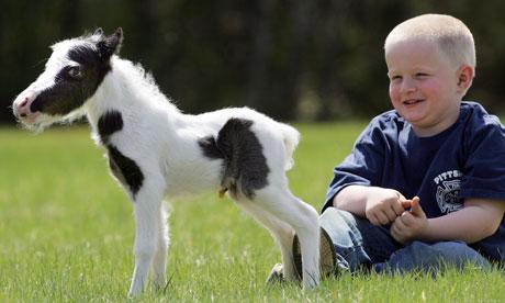 Einstein - najmniejszy koń świata
