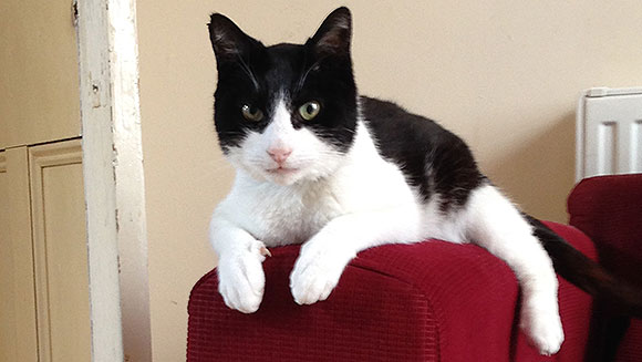Najgłośniejszy kot świata