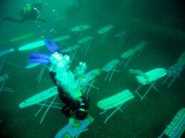 Prasowanie pod wodą - Rekord