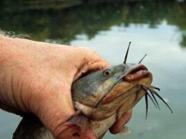 Rekordowe łowienie ryb