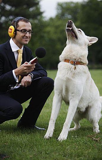 Szczekanie psów - rekord Guinessa