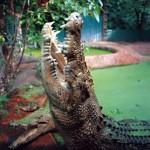 Największy krokodyl w niewoli
