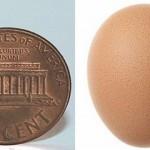 Najmniejsze jajko świata