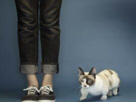 Najniższy kot świata