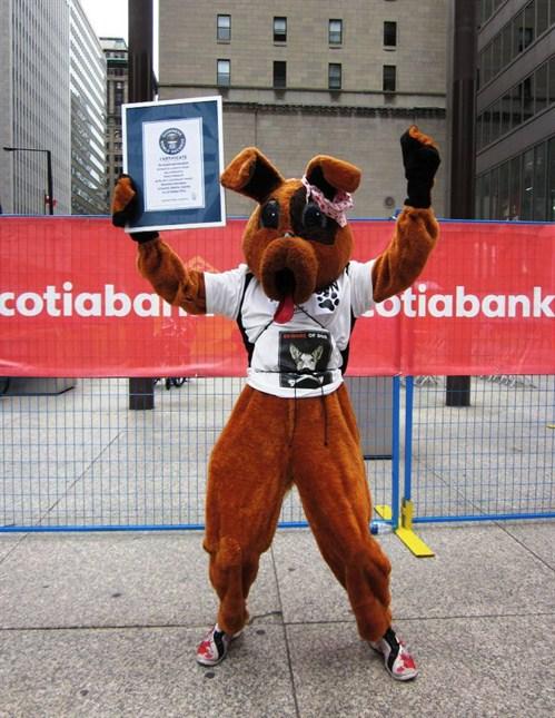 Najszybsza maskotka wpół-maratonie