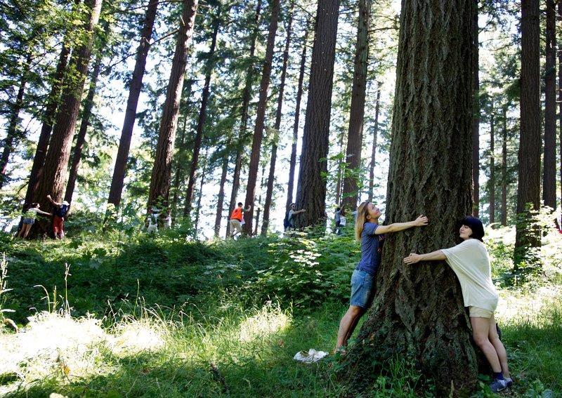 Przytulanie drzew - rekord Guinessa
