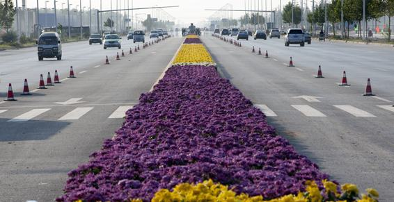 Rekord Guinessa na najdłuższy dywan z kwiatów