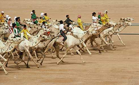 Wyścigi wielbłądów