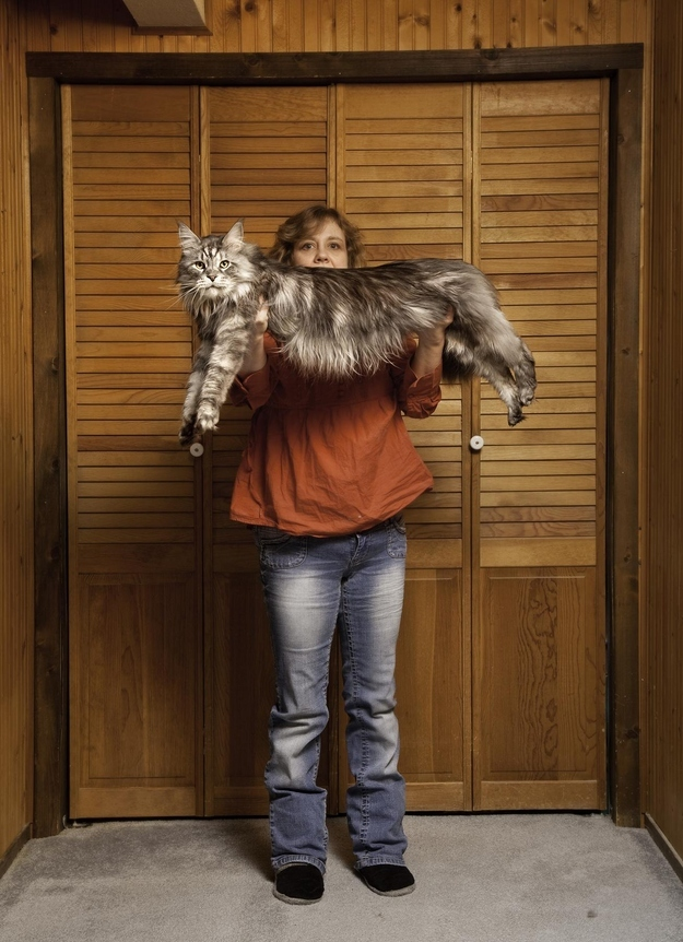 Najdłuższy kot świata