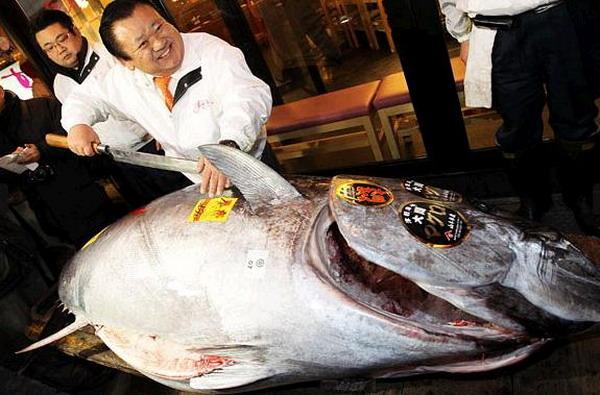 Najdroższy tuńczyk - rekord Guinessa
