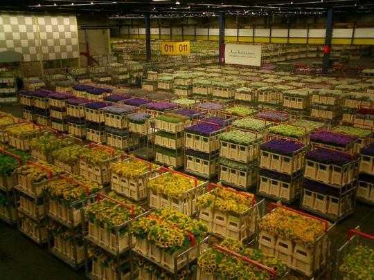 Największy targ kwiatów
