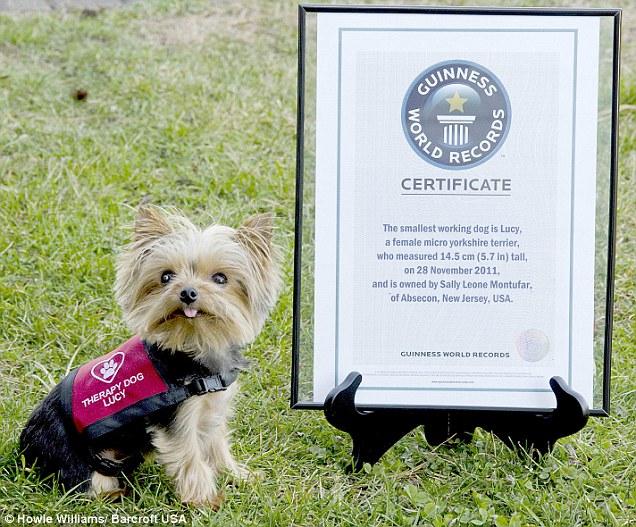 Najmniejszy pracujący pies naświecie