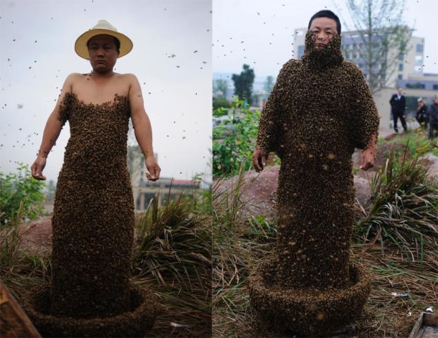 Pszczoły naciele - rekord