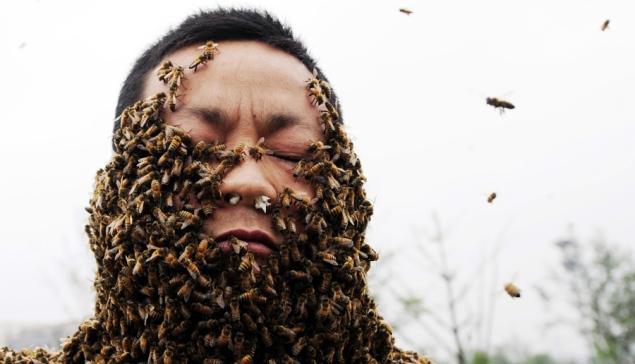 Tysiące pszczół naciele