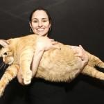 Najgrubszy kot świata nie żyje