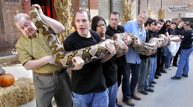 Najdłuższy wąż świata wniewoli
