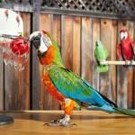 Papuga grająca w kosza