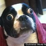 Pies o największych oczach