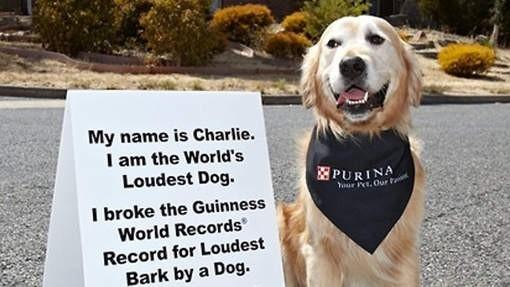 Najgłośniejszy pies świata