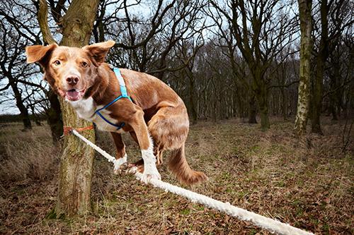 Pies, którychodzi polinie