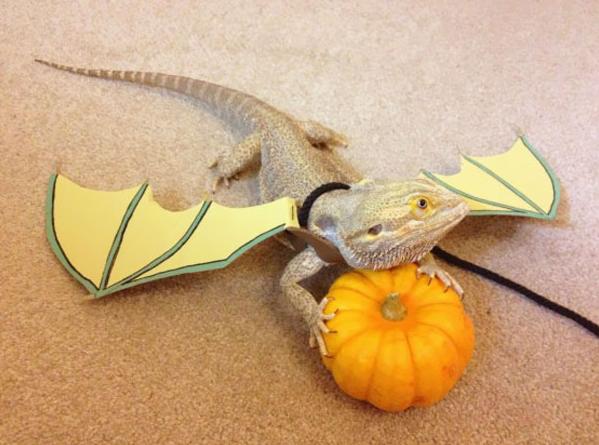 Halloween - zwierząta