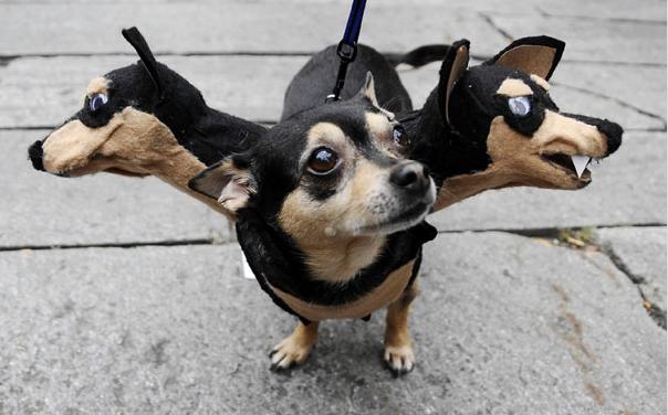 Kostiumy dla zwierząt