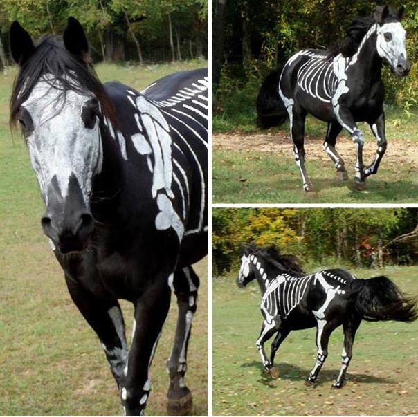 Przebrania dla zwierząt - koń
