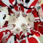 Tylu Świętych Mikołajów nie widział jeszcze nikt na świecie!