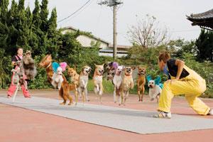 Psy skaczące przezskakankę - Szalone Rekordy Guinessa odcinek 01