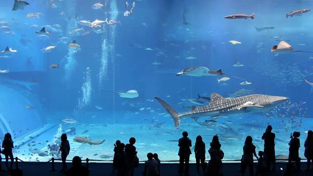 Największe akwarium świata