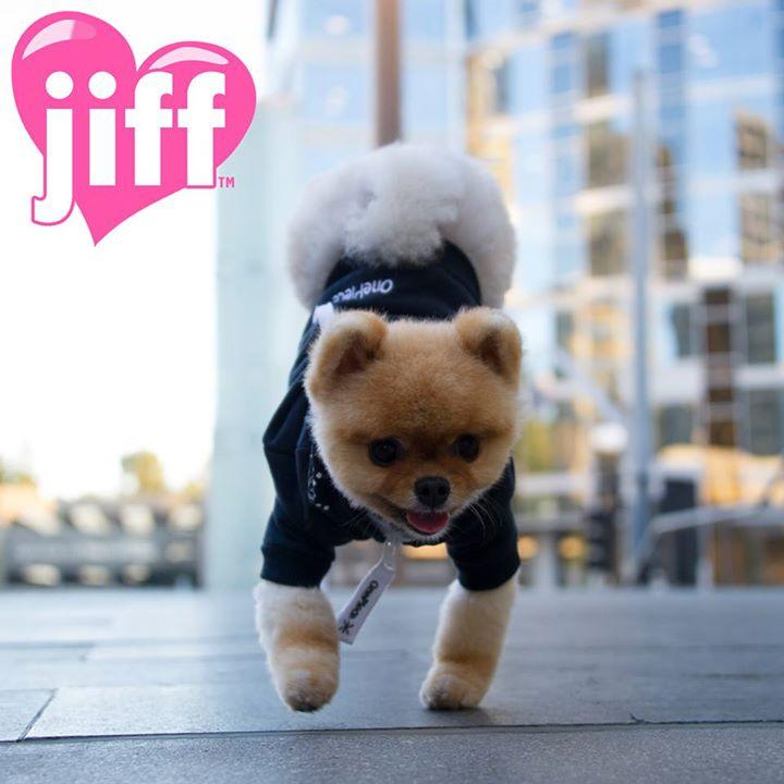 Jiff- najszybszy pies nadwóch łapach - rekord Guinessa