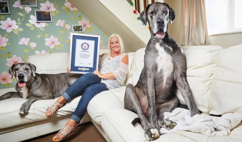 freddy - największy pies świata żyjący