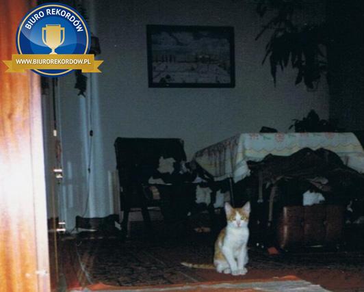 Najstarszy kot - rekord Polski