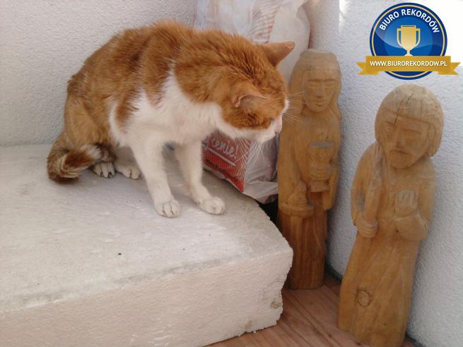 Najstarszy kot wPolsce