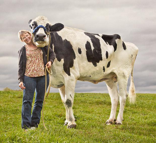 Najwyższa krowa - rekord Guinnessa