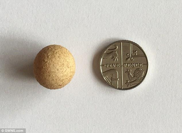 Najmniejsze jajko naświecie