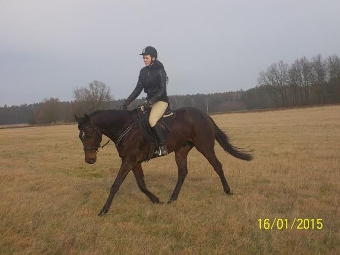 Mijaz - najszybszy koń