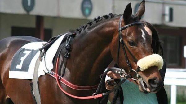 Najszybszy koń - rekord Polski