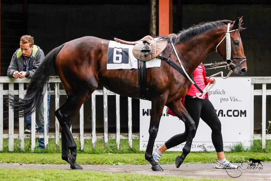 Najszybszy koń wPolsce
