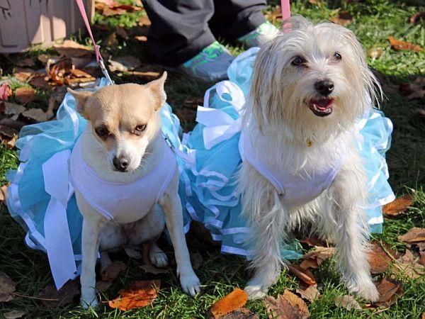 Najwięcej psów wchustach - rekord Guinnesa