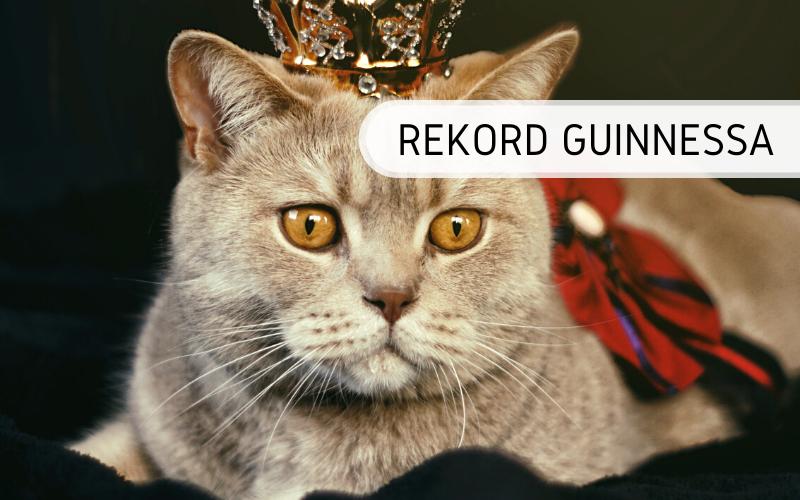 Rekord Guinnessa - najstarszy kot