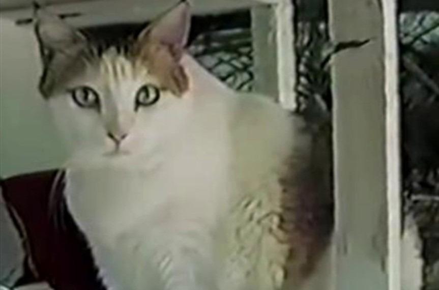 najstarszy kot whistorii
