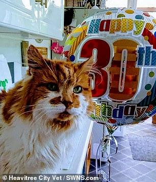 najstarszy żyjący kot naswiecie