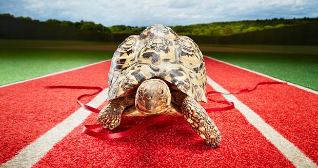 Najszybszy żółw świata - rekord Guinnessa