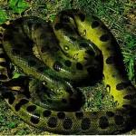 Największy wąż świata